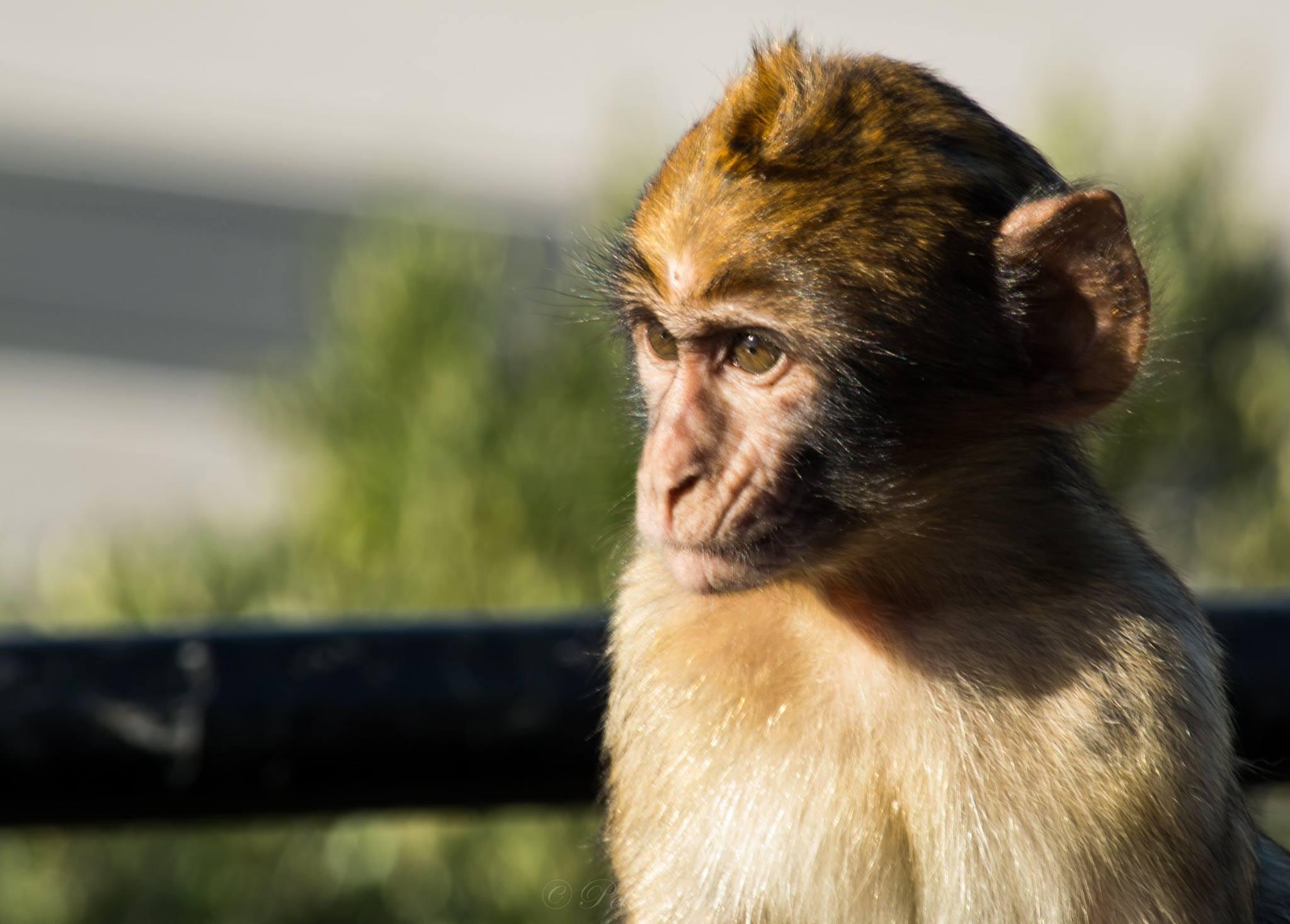 monkey-with-hazel-eyes