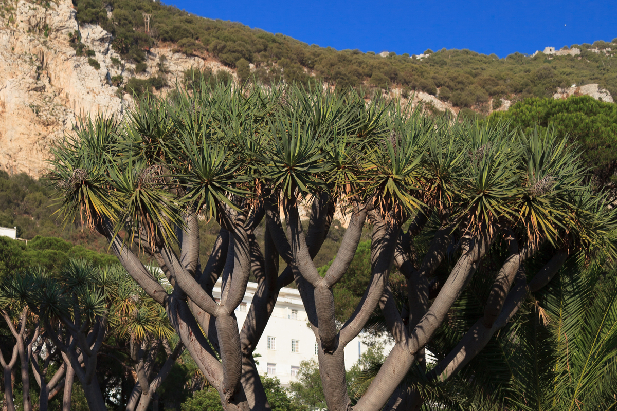 Botanical garden of Gibraltar